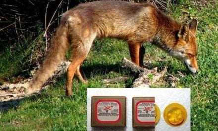 Αρχίζει ο εμβολιασμός για την λύσσα στα άγρια ζώα. Οδηγίες για τον άνθρωπο