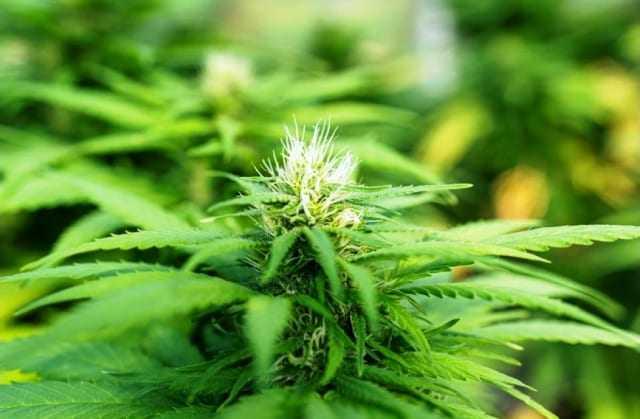 Οι 5 κορυφαίοι λόγοι για να τρώτε σπόρους μαριχουάνας σε τακτική βάση
