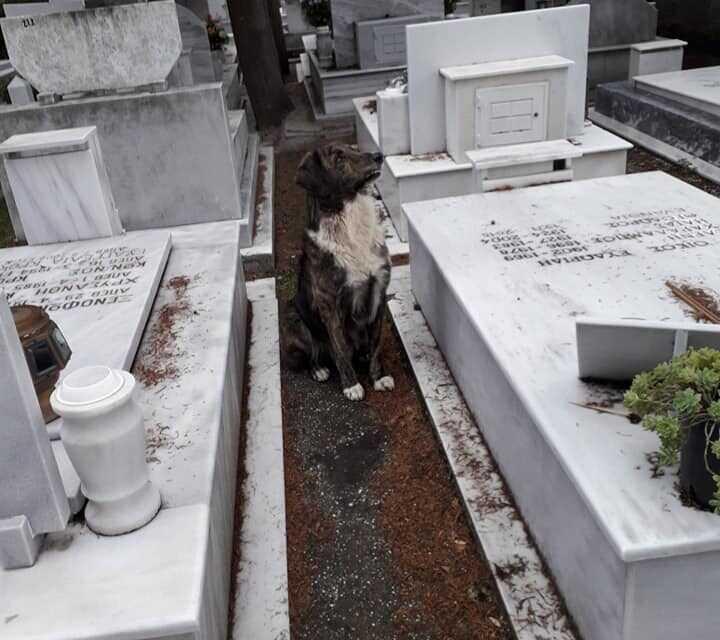 Καβάλα | Συγκινεί ένας σκύλος στα Νεκροταφεία